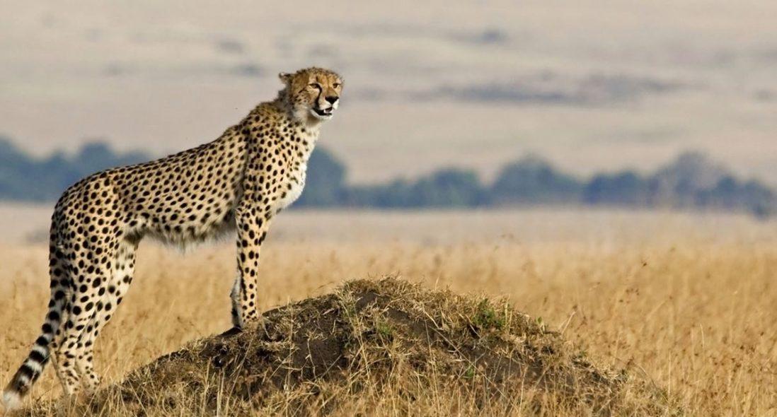 Bramwel Adventure Safaris