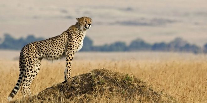 Bramwel Adventure Safaris