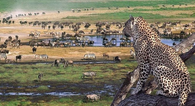 4 Days Serengeti and Ngorongoro