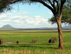 Top 10 Arusha Half day tours