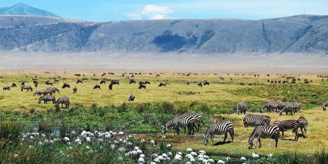 When to go to Ngorongoro