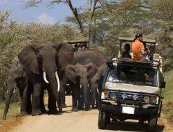 The 15 Best Arusha Safaris